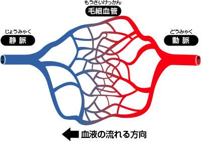 閉鎖血管系
