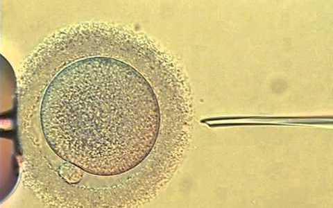 生命の始まり「受精の瞬間」動画まとめ