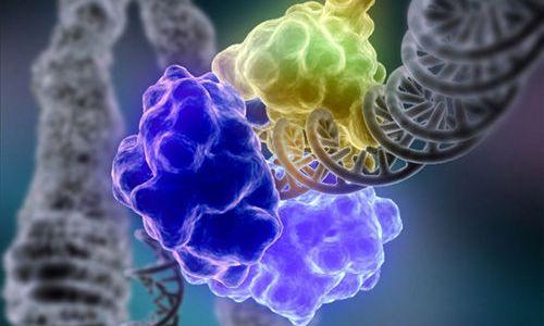 合成酵素(リガーゼ)の種類