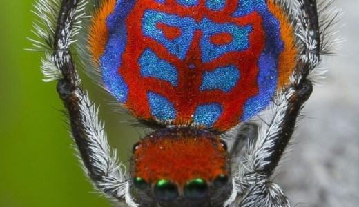 クモのイメージを再編成させる美しい新種蜘蛛