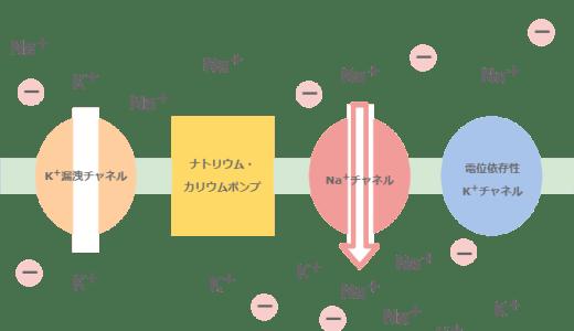 活動電位の2つのグラフ-電極が細胞内外・細胞外外-