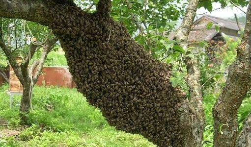 一万匹のミツバチが織りなすウェーブがすごい