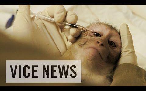 オランダの霊長類研究センターでのサルを用いた実験の様子。これが受け入れなければならない現実。