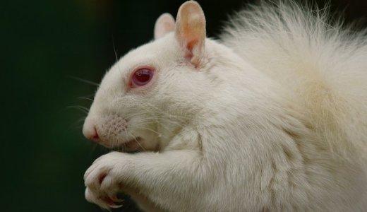 【Q&A】アルビノと白化種の違いとは?