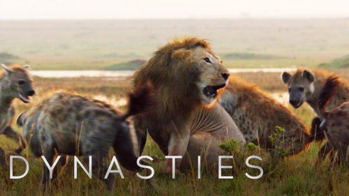 多勢に無勢。王者ライオンも20匹のハイエナに囲まれたらなすすべなし。