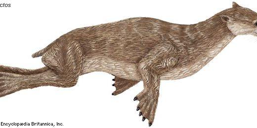 【Q&A】アシカやアザラシの祖先はどんな生物?