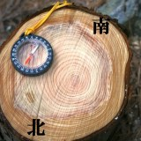 【Q&A】なぜ年輪は南側の方が幅が太くなっているの?