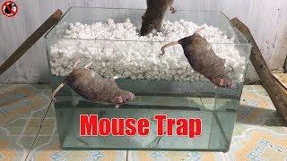 水槽と発泡スチロールだけでめちゃくちゃ簡単なネズミトラップを作ってみた