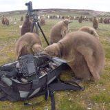 カメラバッグを放置していたら赤ちゃんペンギンが興味津々な様子で寄ってきた