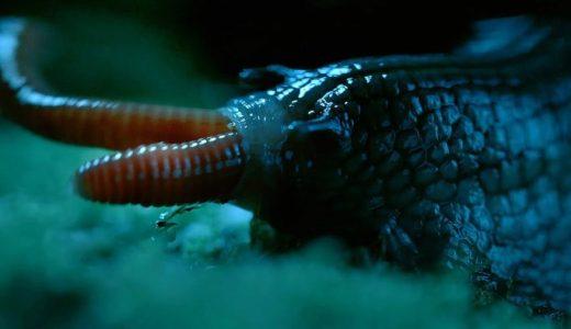 【閲覧注意】巨大カタツムリがミミズをずるずると飲み込んでしまう映像