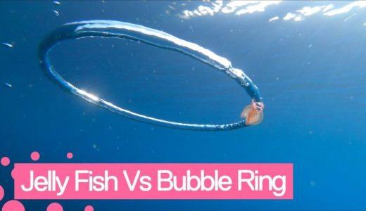 ダイバーの放つバブルリングに巻き込まれて高速回転するクラゲ
