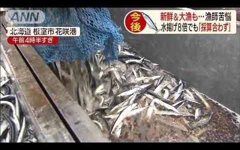 【NEWS】サンマが獲れない!!65トン水揚げしても採算が合わず