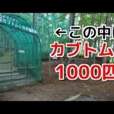 山を仕切って1000匹のカブトムシを放っている体験型自然観察施設「ムシムシランド」がすごい