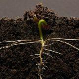 YOUTUBEで1300万回再生された大豆が育つだけの映像がすごい