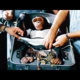 【動物実験】宇宙空間が生物に与える影響を調べるためにチンパンジーを宇宙に送ったNASAの実験映像