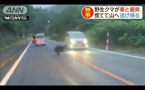 【熊出没注意】野生のクマが走行中の車と衝突したらどうなる?