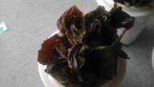三富紅茶サンプル9