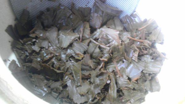 おごせ茶園20130916 おごせ茶園和紅茶2012 -茶殻