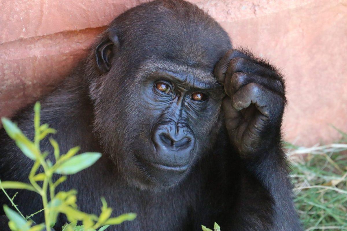Comment réduire le stress au travail ?  Ce que nous apprennent les babouins du Kenya....