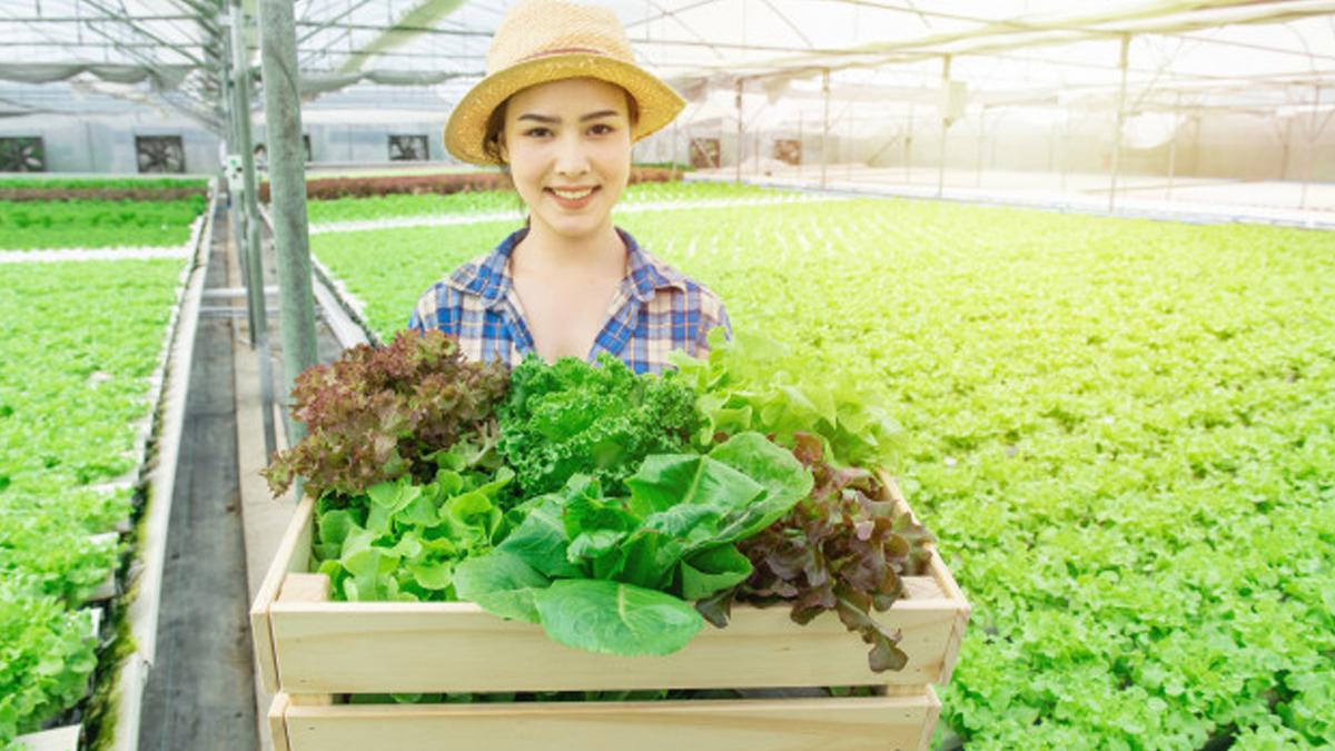 Cara Membangun Usaha di Bidang Pertanian