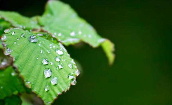 雫をのせた緑の葉