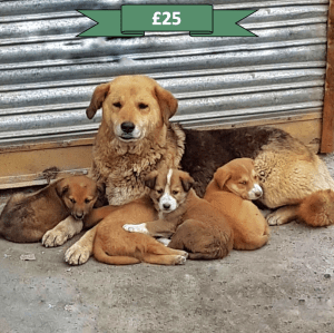 Your generous donation will sterilise one stray dog, helping to control the population and end the cycle of suffering for stray dogs