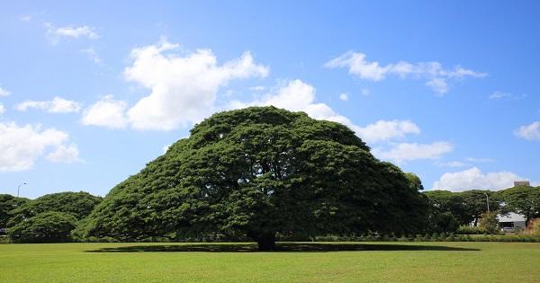 日立の木樹木画像