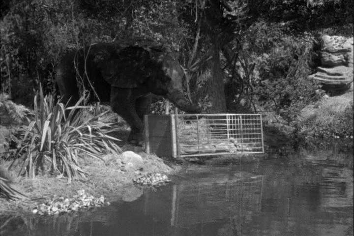 Tarzan Escapes (1936) – Review   Mana Pop