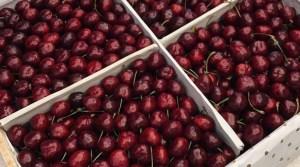 Кыргызстан наладит экспорт новой продукции в Китай