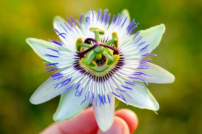 Me réconcilier avec la naturopathie ?