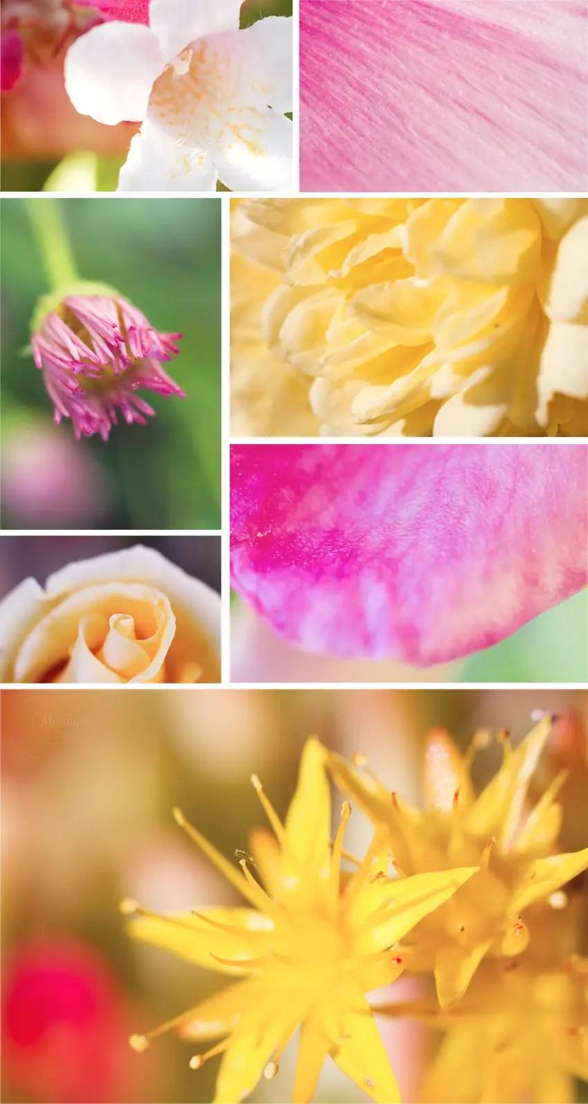 Inspirations - moodboard - fleurs