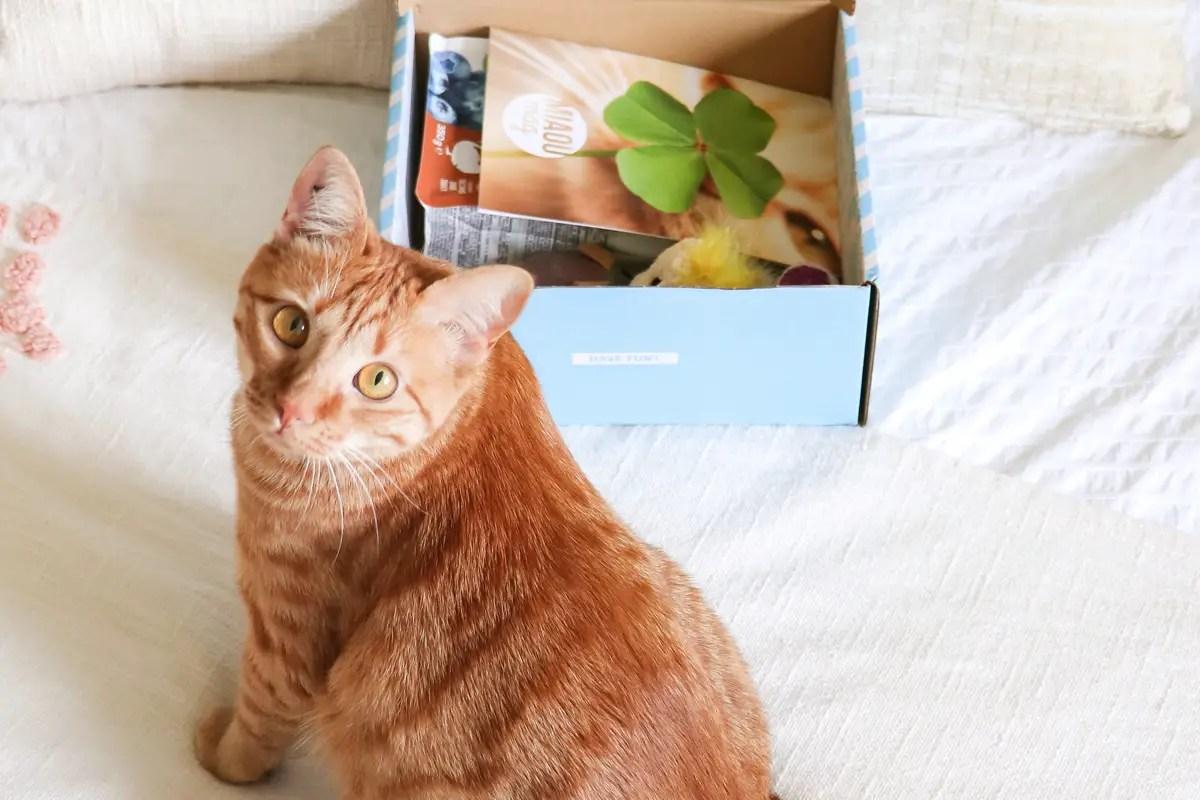 Miaoubox, la box mensuelle pour chats : test et avis