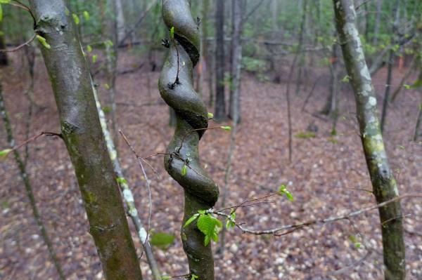 Jamestown, VA, woods (7)