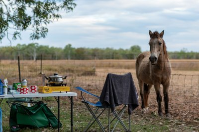 Unpowered site with animal neighbours at Manbulloo Homestead Caravan Park
