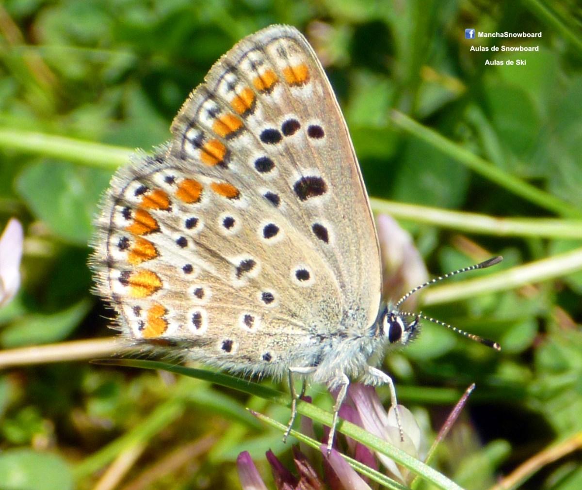borboleta buterfly macro photo lumix penhas da saúde serra da estrela portugal
