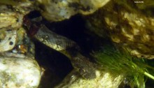 cobra snake serra da estrela underwater