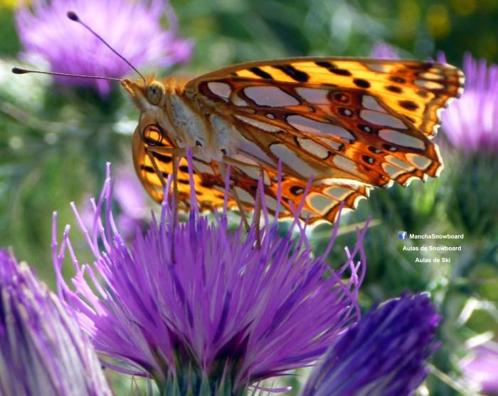 macro borboleta butterfly serra da estrela