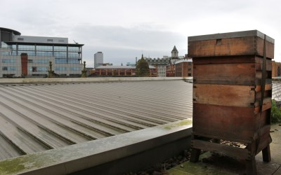 City Centre Beehives – Eversheds Sutherland