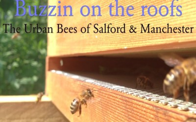 Buzzin on the Roofs – Manchester & Salford's Urban Bees