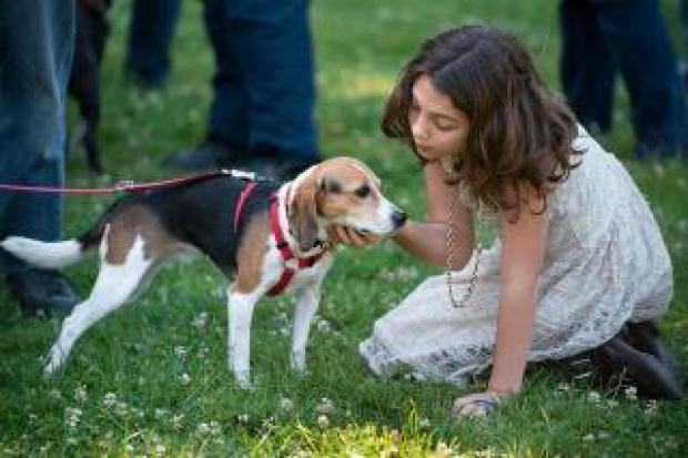 Ella Warner, 9, visits with another rescue saved thanks to Beagle Freedom Project.
