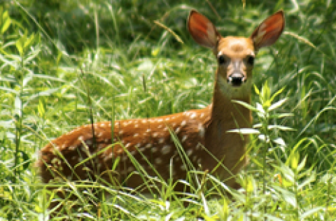 Tis the season for fawns and other baby animals. NH Fish & Game says leave them alone.