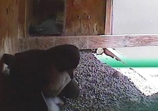 falcons4