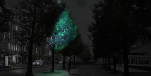 No 2: Trees lighting the way.