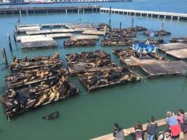 #lifegoals at Pier 39 in San Francisco, California