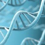 Rappresentazione grafica del DNA
