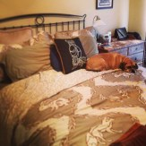 The new bedding