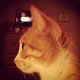 Small cat in profile