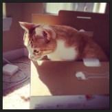 Finn In A Box