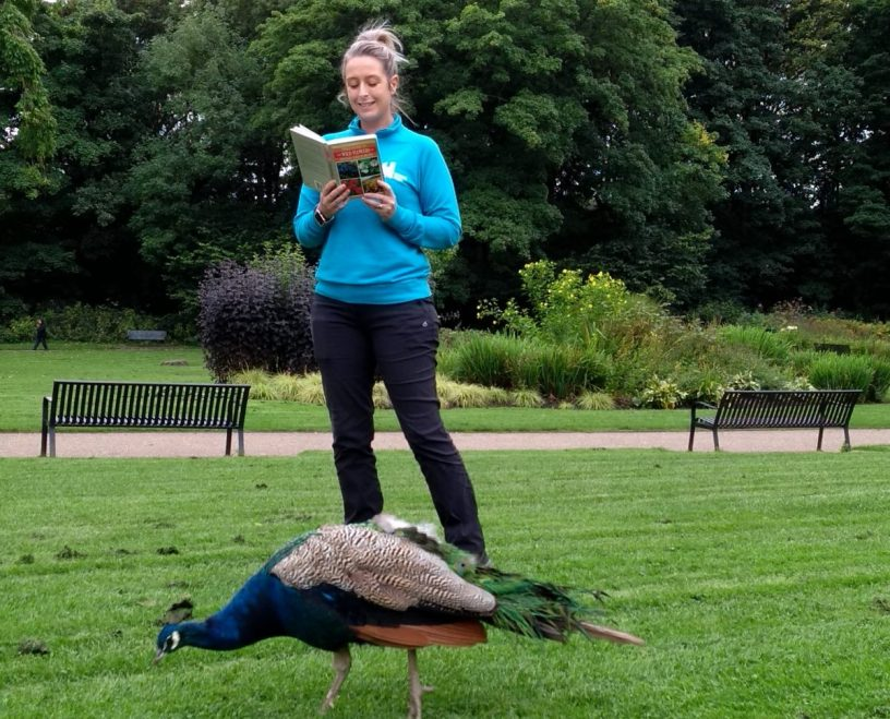 Peacock being read to at Heaton park