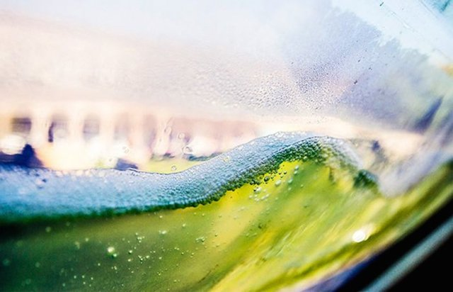algen-mikroorganismus-photosynthese